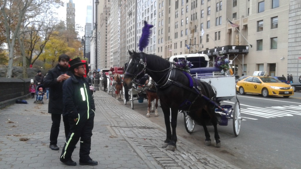 My View of the NYC Carriage Horses